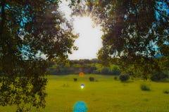 Солнце излучает светить через деревья, поле травы на предпосылке сновидение стоковое фото rf