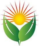 Солнце и зеленый цвет Стоковое Изображение