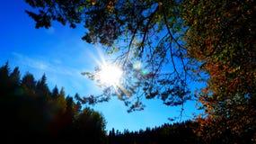 Солнце и forrest Стоковая Фотография