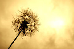 солнце к стоковые фотографии rf