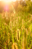 солнце лета Стоковые Фото