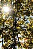 солнце листьев осени Стоковая Фотография