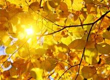 солнце листьев осени Стоковое Изображение RF
