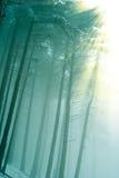 солнце лучей пущи туманное тихое Стоковое Фото