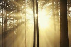солнце лучей Стоковые Фотографии RF