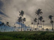 Солнце над тропическим пляжем с ладонью кокоса на Порту de Galinhas, Бразилии Силуэты пальм и изумляя облачного неба дальше стоковая фотография rf
