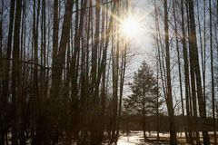 Солнце на лесе весны стоковые фото
