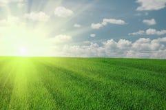 солнце неба поля зеленое Стоковая Фотография RF