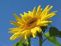 солнце облицовки Стоковая Фотография