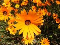 солнце облицовки Стоковое Фото