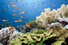 солнце океана рыб Стоковое фото RF