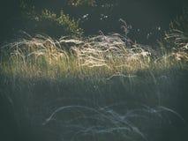 Солнце осветило вверх glade в лесе стоковые изображения