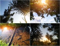 Солнце освещает коллаж лета с восходом солнца и соснами Предпосылка природы с светом солнца стоковое фото