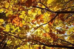 солнце осени Стоковые Изображения RF