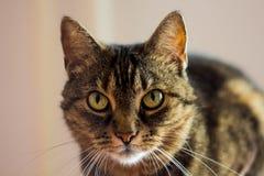Солнце отлично для кота Стоковая Фотография