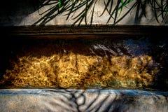 Солнце отражая в воде пропуская в falaj с золотым дном цвета стоковое фото rf