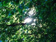 Солнце полдня стоковые изображения