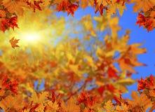 Солнце предпосылки листьев осени испускает лучи космос ваш текст Стоковое Фото