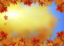 Солнце предпосылки листьев осени испускает лучи космос для текста Стоковое Изображение RF