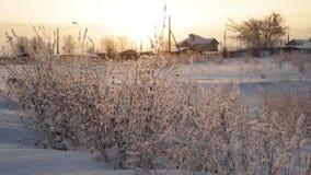 Солнце, предыдущий заморозок утра зимы сток-видео