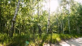 Солнце природы заводов леса видеоматериал