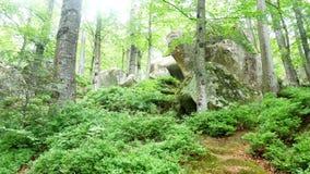 Солнце природы зеленого цвета леса видеоматериал