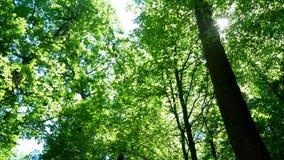 Солнце природы лесных деревьев видеоматериал