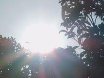 Солнце природы утра Стоковое Изображение RF