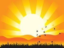 солнце природы ландшафта травы бабочек Стоковое Изображение RF