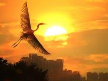 солнце птиц Стоковые Изображения RF