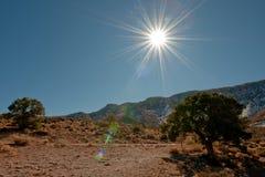 солнце пустыни Аризоны Стоковые Изображения
