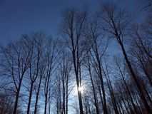 солнце пущи Стоковые Изображения RF