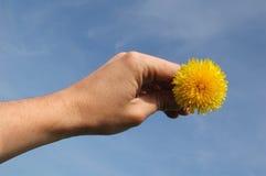 солнце руки Стоковые Фотографии RF