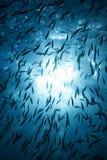 солнце рыб стоковое изображение