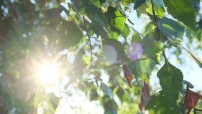 Солнце светит через листья сток-видео