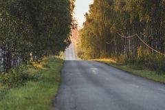 Солнце светя в конце дороги с переулком березы кроме его - солнечный летний день, золотой отчасти запачканный час, стоковые изображения