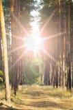 Солнце светя над майной леса, проселочной дорогой, путем, дорожкой через восход солнца захода солнца соснового леса в лесных дере Стоковое Изображение