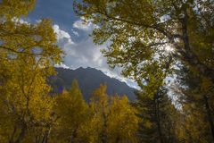 Солнце светя от ветвей в осени Стоковая Фотография