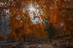 Солнце светя от ветвей в осени Стоковые Изображения RF