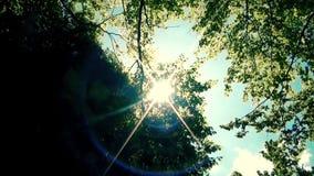 Солнце светя через деревья в лесе сток-видео