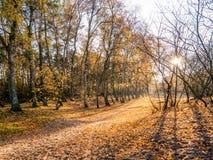 Солнце светя через деревья на пути с упаденными листьями в последнем aut стоковое изображение rf