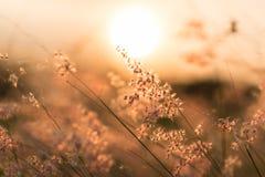 Солнце сияющее и трава коричнева Стоковая Фотография