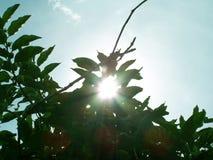 солнце смотреть прищурясь Стоковые Фотографии RF