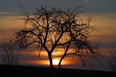 солнце строба Стоковое Изображение