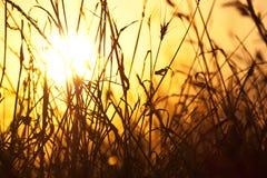 солнце сухой травы Стоковое фото RF