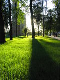 солнце тени Стоковые Фотографии RF
