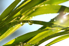 солнце травы высокорослое Стоковая Фотография RF