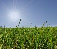 солнце травы Стоковое Изображение RF