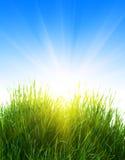 солнце травы стоковое фото