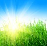солнце травы Стоковые Фотографии RF